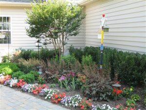 colored flowers in garden in Rockville, Maryland