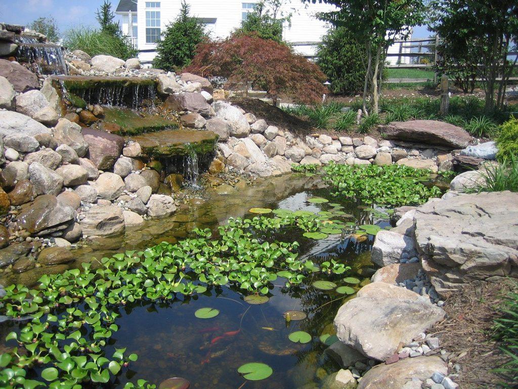 koi ponds in Rockville